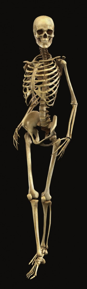 скелет женщины