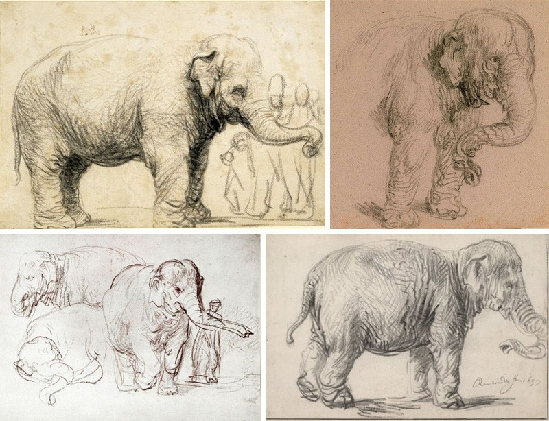 Слон Ханскен Рембрандт