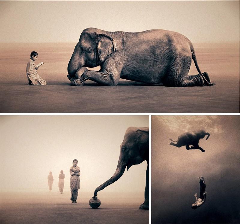 Фото слонов Грегори Кольбер