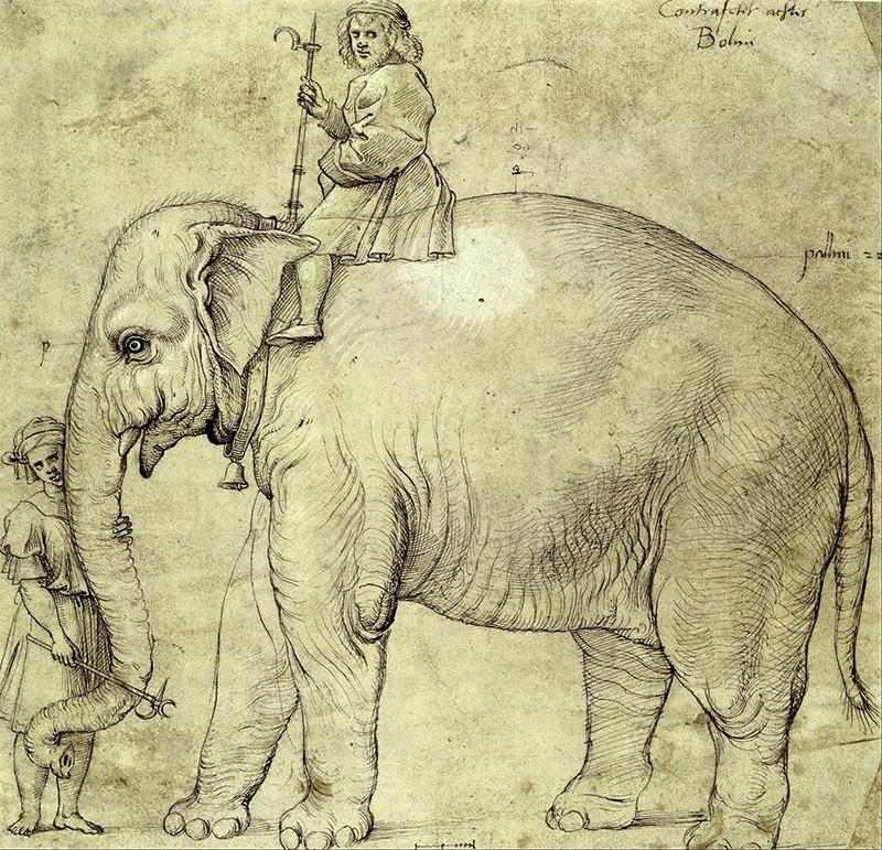 Анноне - слон Римского Папы Льва X