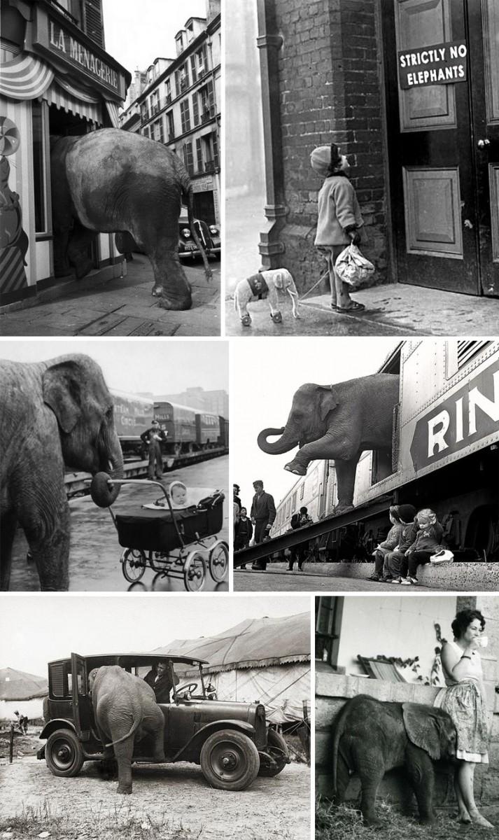 Ретро фотографии со слонами