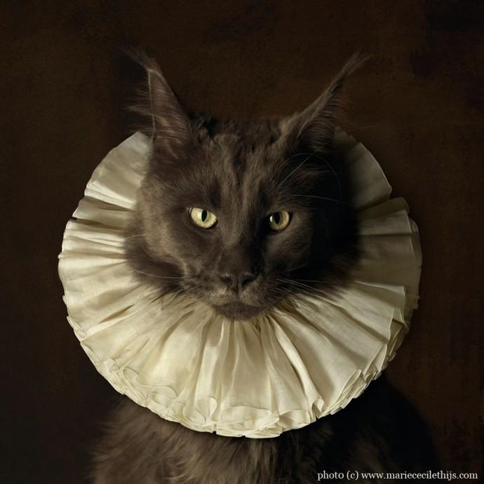 Кот с белым воротником